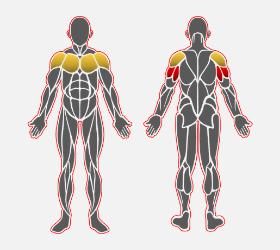 パートナーアシストディップスで使用する筋肉