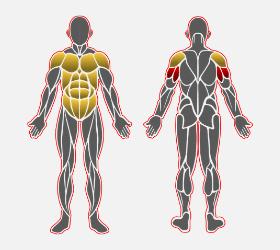 ストレートバーディップスで使用する筋肉