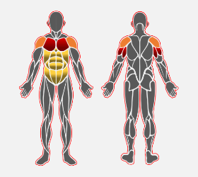 ウェイテッドディップスで使用する筋肉